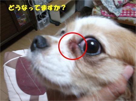 03_convert_20140714180215.jpg