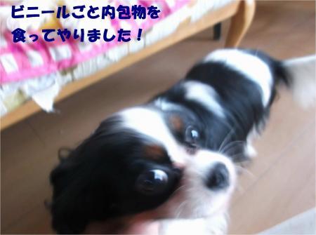 03_convert_20140722174955.jpg