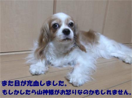 03_convert_20140728171714.jpg