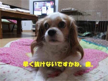 03_convert_20140827173200.jpg