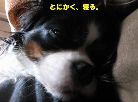 04_convert_20140228175102.jpg