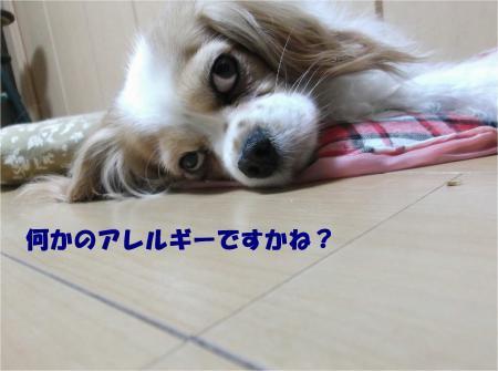 04_convert_20140417173204.jpg