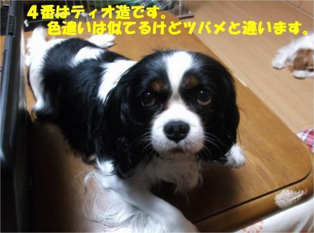 04_convert_20140610144452.jpg