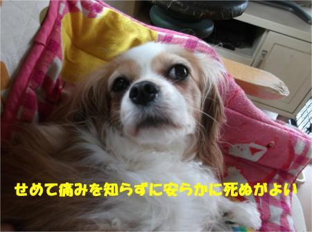 04_convert_20140624185225.jpg