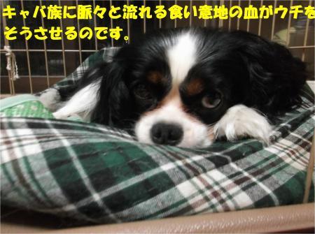 04_convert_20140708173005.jpg