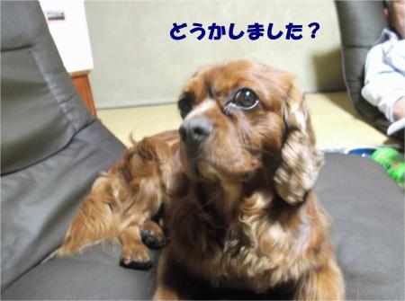 04_convert_20140730174741.jpg