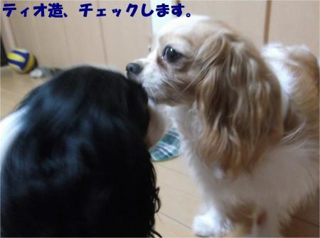 04_convert_20140731173937.jpg