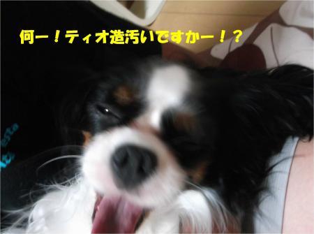 04_convert_20140911183803.jpg