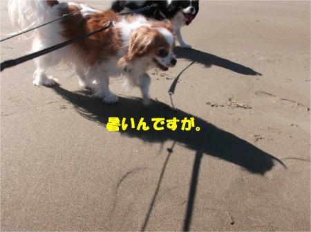 05_convert_20140217165204.jpg