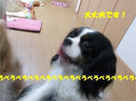 05_convert_20140311180220.jpg