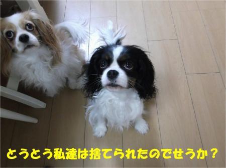 05_convert_20140327165927.jpg