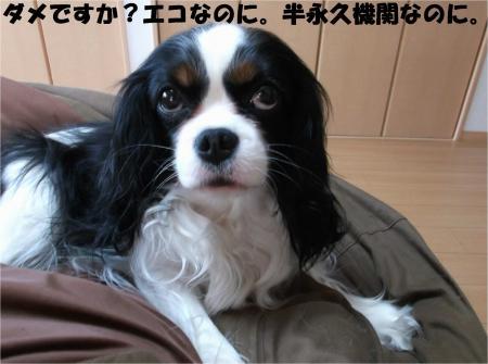 05_convert_20140403175348.jpg