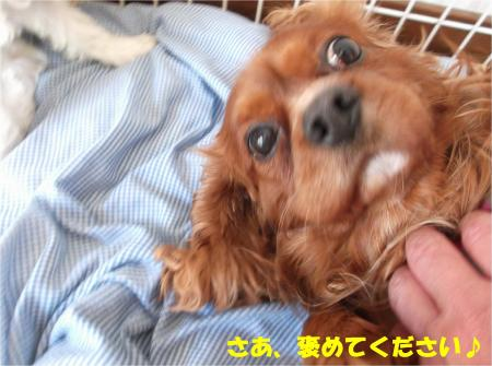 05_convert_20140410164828.jpg