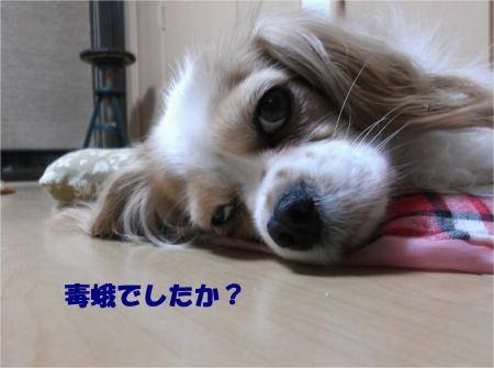 05_convert_20140417173156.jpg