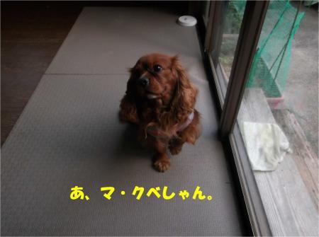 05_convert_20140423181636.jpg