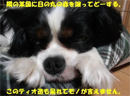 05_convert_20140617182519.jpg