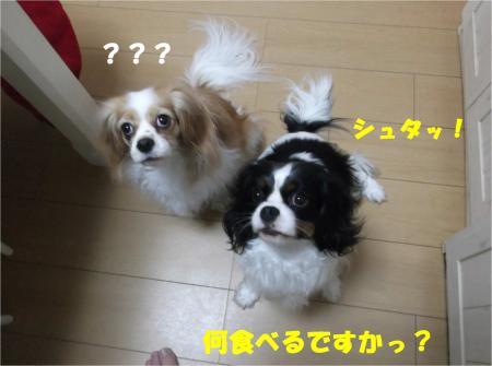 06_convert_20140220182106.jpg