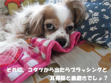 06_convert_20140313172204.jpg