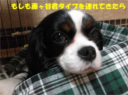 06_convert_20140320184127.jpg