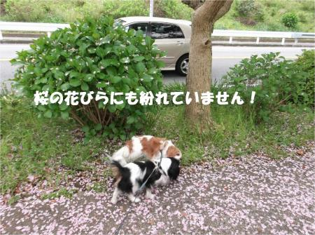 06_convert_20140421182531.jpg