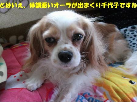06_convert_20140422184959.jpg