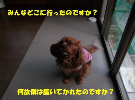 06_convert_20140423181645.jpg