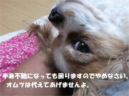 06_convert_20140619182038.jpg