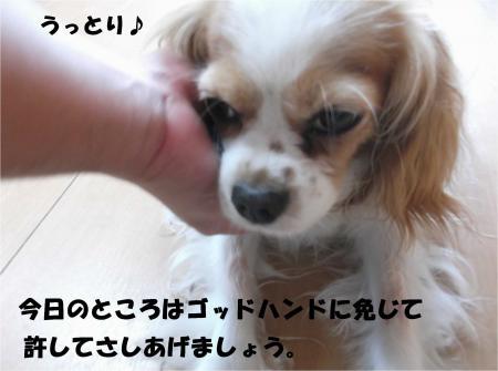 06_convert_20140709180713.jpg