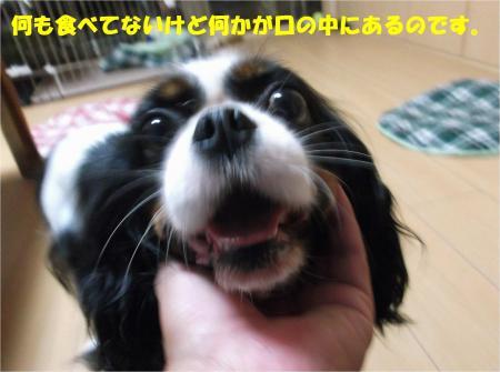 06_convert_20140819175306.jpg