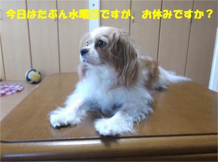 06_convert_20140820170810.jpg