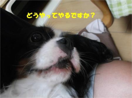 06_convert_20140911183821.jpg