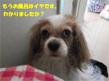 07-2_convert_20140812201638.jpg