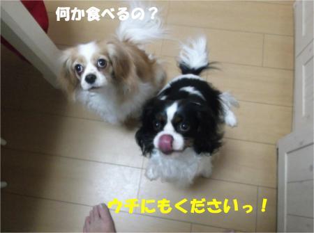 07_convert_20140220182115.jpg