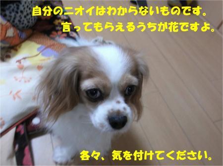 07_convert_20140221184552.jpg