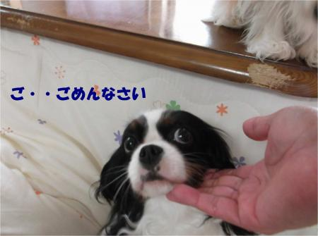 07_convert_20140307172009.jpg