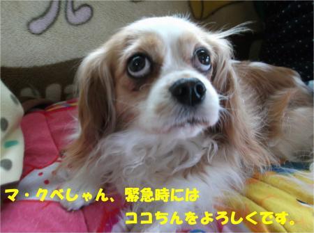 07_convert_20140422185009.jpg