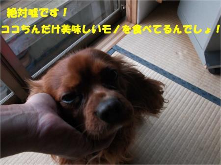 07_convert_20140423181654.jpg