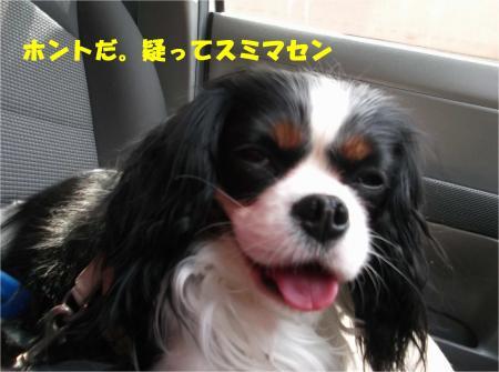 07_convert_20140424183103.jpg