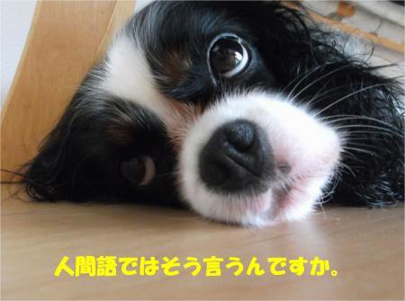 07_convert_20140630180046.jpg