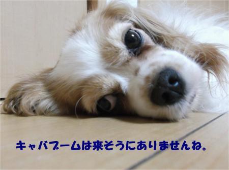07_convert_20140708173038.jpg