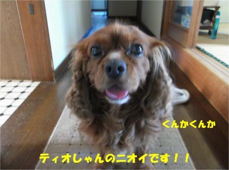 07_convert_20140716181237.jpg