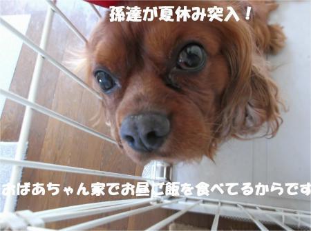 07_convert_20140728171752.jpg