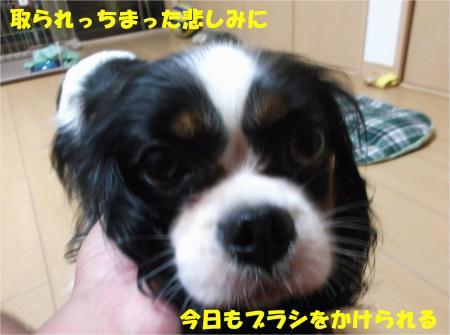 07_convert_20140731174005.jpg