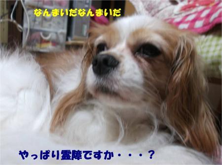 07_convert_20140818171908.jpg