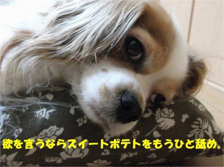 08-4_convert_20140509194003.jpg