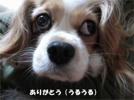 08_convert_20140331181043.jpg