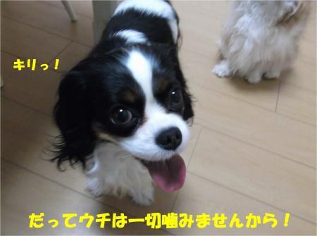 08_convert_20140404192056.jpg