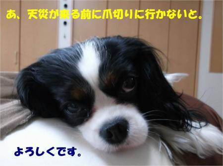 08_convert_20140411181425.jpg