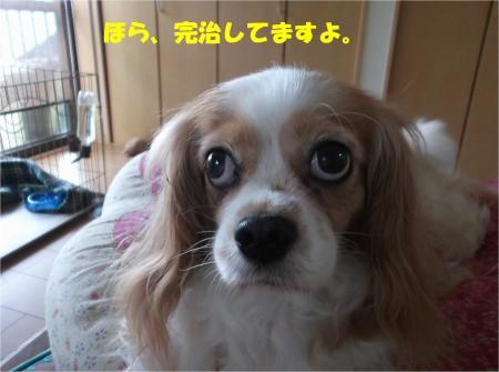 08_convert_20140714180302.jpg