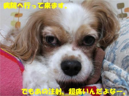 08_convert_20140805173609.jpg